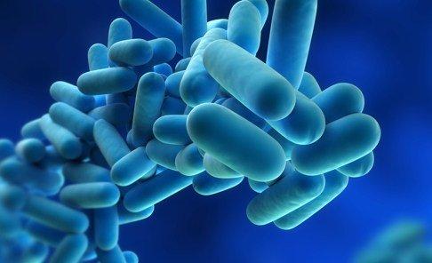 legionella bacteria as seen under a microscope
